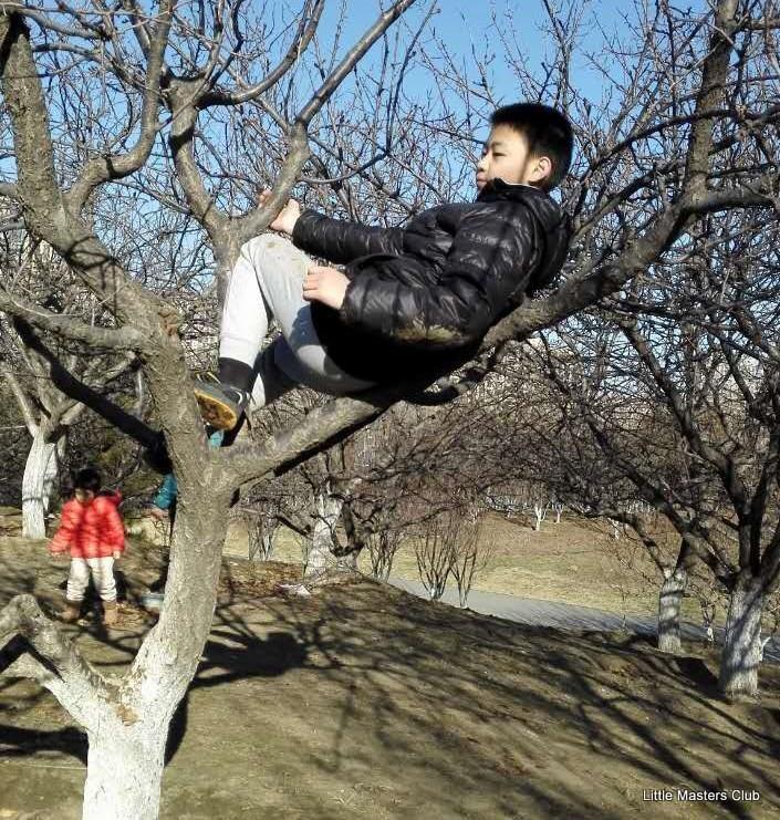 on-a-tree